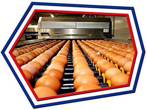 Quality checks of eggs